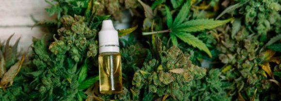 L'expérimentation thérapeutique du cannabis en France prévue pour septembre