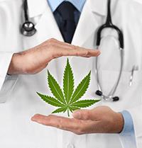 ANSM – Dossier Cannabis à usage médical
