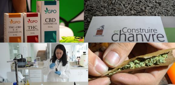 """Thérapeutique, """"bien-être"""", """"récréatif"""", chanvre : le cannabis sous toutes ses formes à la loupe des députés"""