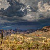 Arizona : la légalisation du cannabis au vote de novembre