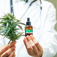 La douleur est la première indication de l'usage médical du cannabis