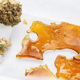 Etude : un taux de THC plus élevé n'induit pas forcément d'effet plus fort