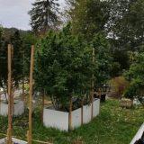 Un trafic de cannabis démantelé dans le Sud Creusois