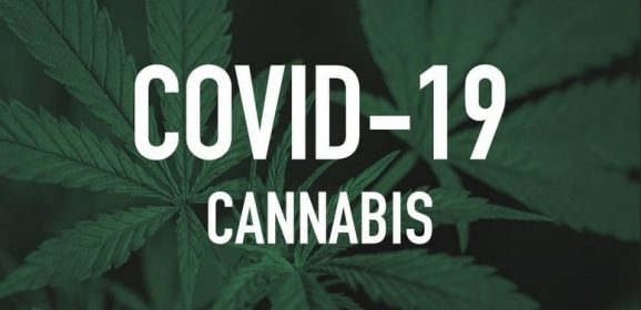 Le cannabis, médicament performant contre la Covid-19. Bien plus que l'hydroxychloroquine