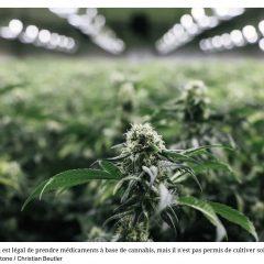 Le cannabis devient plus accessible pour 100'000 patients en Suisse