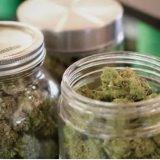 Le cannabis pourrait aider à réduire l'exposition au fentanyl, croit un chercheur