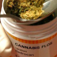 Pays-Bas : Les exportations de cannabis médical en baisse, une première depuis dix ans