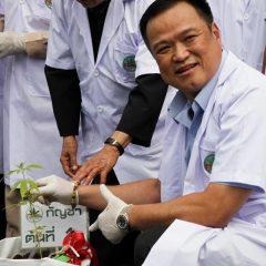 La Thaïlande incite les agriculteurs à cultiver du cannabis médical