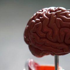 Etude : Le CBD améliore la cognition dans la maladie d'Alzheimer