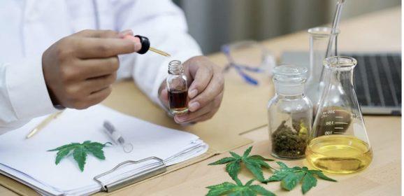 Cannabis : la France sur le point de légaliser officiellement le CBD