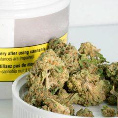 Les premières fleurs allemandes de cannabis médical arrivent en pharmacie