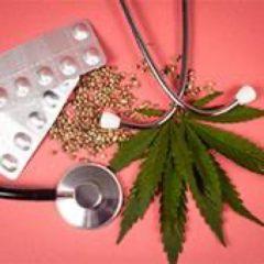Création d'un Comité scientifique temporaire : « Culture en France du cannabis à usage médical, spécifications techniques de la chaine de production allant de la plante au médicament »