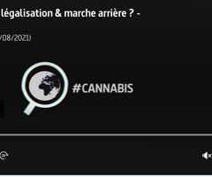 Désintox. Non, les pays ayant légalisé le cannabis ne sont pas revenus sur leur décision