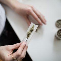 Panama : le pays légalise l'usage du cannabis à des fins médicales