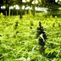 Le cannabis ne sera finalement pas légalisé au Grand-Duché de Luxembourg
