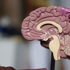 Étude : Le CBGA intéressant contre les crises d'épilepsie